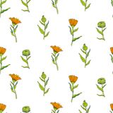 Seamless floral pattern, Calendula flower isolated on white background, botanical hand drawn vector illustration Royalty Free Stock Images