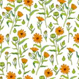 Seamless floral pattern Calendula officinalis flower isolated on white background, botanical hand drawn vector Royalty Free Stock Photos