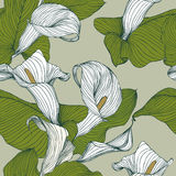 Seamless floral pattern - calla Stock Images