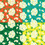 Seamless floral pattern of camomile. Royalty Free Stock Image