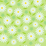 Seamless floral pattern. Seamless pattern from camomiles and leaves Royalty Free Stock Images