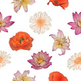Seamless floral pattern -  chamomile, poppy, lotus, royal lily. Chamomile, poppy, lotus, royal lily flowers Stock Photography