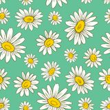 Seamless floral pattern Chamomile wild field flower isolated on green background, hand drawn colorful daisy sketch. Vector illustration for design package tea Stock Images