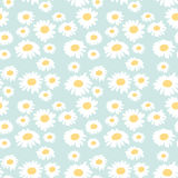 Seamless floral pattern with chamomiles Royalty Free Stock Image