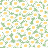 Seamless floral pattern with chamomiles Stock Images
