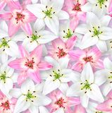 Seamless floral pattern. Chaotic arrangement of flowers. White and pink lily flower on a pale lilac background. Spring-summer style royalty free stock photos