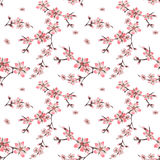Seamless floral pattern with cherry blossom texture on white Royalty Free Stock Photo