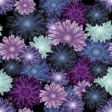 Seamless floral pattern with colored daisy flowers on dark background. Seamless floral pattern with colored daisy flowers on black background Stock Photography