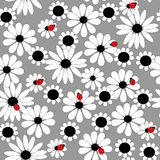 Seamless floral pattern with daisies and ladybirds Royalty Free Stock Images
