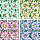 Seamless floral Pattern with Daisy Flowers Stock Image