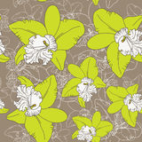 Seamless floral pattern fantasy blooming green white orchids on brown background. Royalty Free Stock Photos