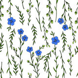Seamless floral pattern, Flax plant, wild field flower  on white background, hand drawn sketch vector doodle. Illustration, texture for design package cosmetic Stock Photos