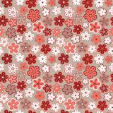 Seamless floral pattern. Flowers texture. Daisy. Stock Photos