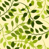 Seamless floral pattern with green acacia leaves royalty free illustration