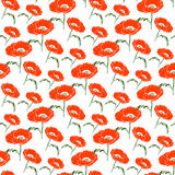 Seamless floral pattern with hand drawn poppy on white background Royalty Free Stock Photography