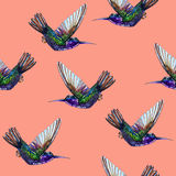 Seamless floral pattern hummingbirds. Royalty Free Stock Images