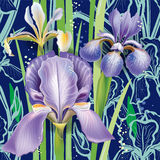 Seamless floral pattern with irises Royalty Free Stock Images