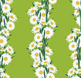 Seamless floral pattern with lines of white flower Royalty Free Stock Images