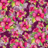 Seamless floral pattern made of red malva flowers on dark cherry background. Watercolor painting. Hand drawn and painted illustration. Can be used as for Royalty Free Stock Photography