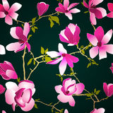 Seamless floral pattern with magnolia Royalty Free Stock Images