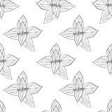 Seamless floral pattern, Nettle wild field flower isolated on white background, hand drawn ink sketch vector, line art. Illustration Urtica dioica for design Stock Image