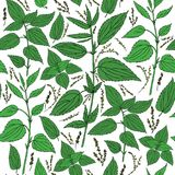Seamless floral pattern, Nettle wild field flower isolated on white background, hand drawn sketch vector doodle. Colorful illustration Urtica dioica for design Royalty Free Stock Image