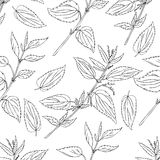 Seamless floral pattern, Nettle wild field flower isolated on white background, hand drawn sketch vector doodle, line. Art illustration Urtica dioica for design Royalty Free Stock Images