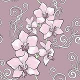 Seamless floral pattern with orchid Royalty Free Stock Image