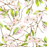 A seamless floral pattern with an ornament of an apple tree branch with the tender pink blooming flowers and green leaves, painted. In a watercolor on a white Royalty Free Stock Photography