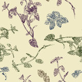 Seamless floral pattern with peppermint sprigs. Fresh subtle nature colors Royalty Free Stock Photo
