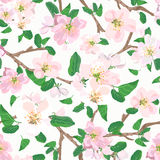 Seamless floral pattern with pink hand drawn flowers.  Royalty Free Stock Photo