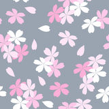 Seamless floral pattern with pink and white Sakura flowers on a gray background. Royalty Free Stock Images