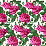 Seamless Floral Pattern. Positive Spring Illustration with Pink Roses. Stock Images