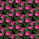Seamless Floral Pattern. Positive Spring Illustration with Pink Roses. Stock Photos