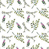 Seamless floral pattern with purple berries and acacia tree branches. Hand drawn isolated on a white background Royalty Free Stock Images
