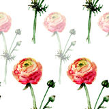 Seamless floral pattern with  Ranonkel flowers Royalty Free Stock Image