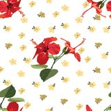 Seamless Floral Pattern Red Hibiscus - Rose Mallow royalty free stock images