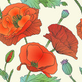 Seamless floral pattern - red poppy Royalty Free Stock Images