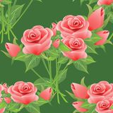Seamless floral pattern with roses. Stock Images