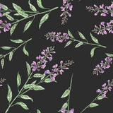 Seamless floral pattern with salvia flower Royalty Free Stock Photos