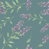 Seamless floral pattern with salvia flower Stock Photo