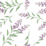 Seamless floral pattern with salvia flower Stock Image