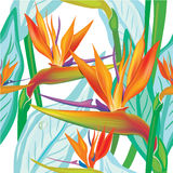 Seamless floral pattern with Strelitzia Stock Photography