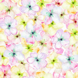 A seamless floral pattern with the tender pink apple tree blooming flowers, painted in a watercolor Stock Image