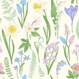 Seamless floral pattern. royalty free illustration