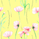 A seamless floral pattern with watercolor hand-drawn tender pink cosmos flowers Stock Image