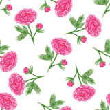 Seamless floral pattern with of watercolor peony . Vector illustration with pink flowers. Background for web pages, wedding invita Stock Images
