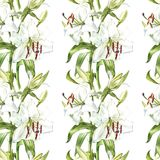Seamless floral pattern. Watercolor white lilies, hand drawn botanical illustration of flowers. Seamless floral pattern. Watercolor white lilies, hand drawn Royalty Free Stock Image