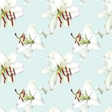Seamless floral pattern. Watercolor white lilies, hand drawn botanical illustration of flowers. Seamless floral pattern. Watercolor white lilies, hand drawn Stock Images