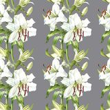 Seamless floral pattern. Watercolor white lilies, hand drawn botanical illustration of flowers. Seamless floral pattern. Watercolor white lilies, hand drawn Stock Image